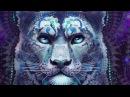 Животные -покровители, Тотемы (практики от Центра Даария)