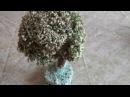Исландский мох Цетрария исландская Декоративное дерево Полезные свойства Бо