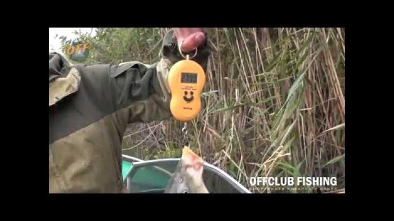Рыбалка в Астраханской области в раскатах Зеленом Острове в Цветном на базе отдыха Offclub Fishing