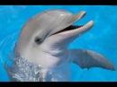 Дельфинотерапия. Исцеляющие звуки дельфинов