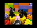 Конструктор Лего. Кошка с собакой, детское видео