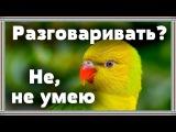 Почему мои попугаи не разговаривают. Как выбрать говорящего попугая.