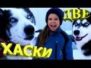 Потерялась собака ХАСКИ Ханна ревнует Lost dog HUSKY Hannah is jealous