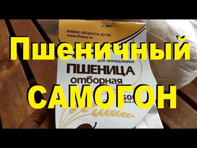 ЖИВОЙ ПШЕНИЧНЫЙ САМОГОН на диких дрожжах с сахаром. От Сан Саныча.