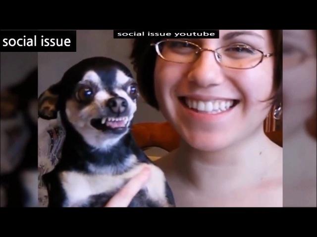 웃음참기2015 강아지편 ㅋㅋㅋ