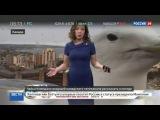 Новости на «Россия 24»  •  Чайка вмешалась в прогноз погоды на канадском телеканале