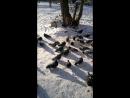 Кормление и поение голубей (2)