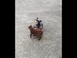 Собакен играет с котом