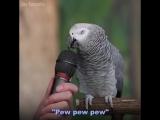 Говорящий Попугай - умный попугай отвечает на вопросы