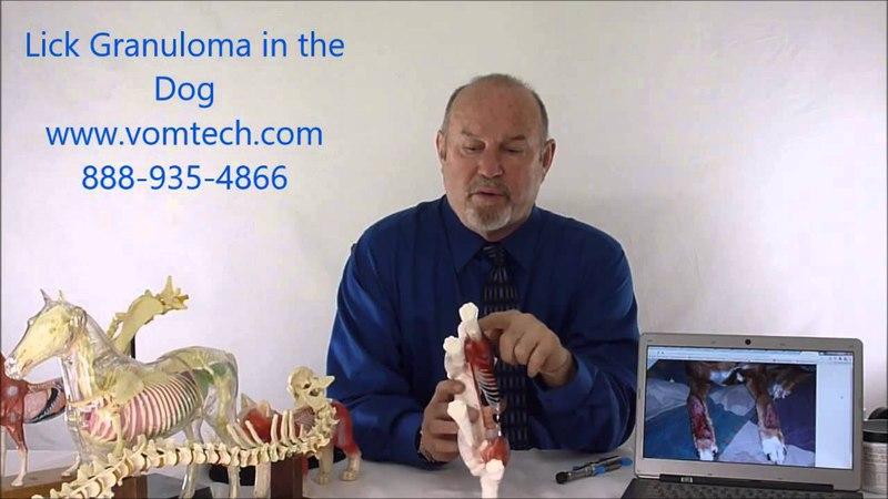 Разлизанная гранулема у собак (висцеральная и лазеротерапия) / Lick Granuloma in the Dog