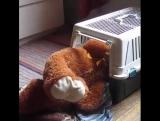 Без медведя спать не буду!