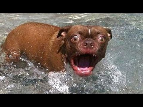 Animals and animal kingdom are the best comedy - Funny animal compilation