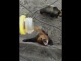Мишка и мед