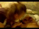 Моя лучшая подруга играет с моей любимой собакой