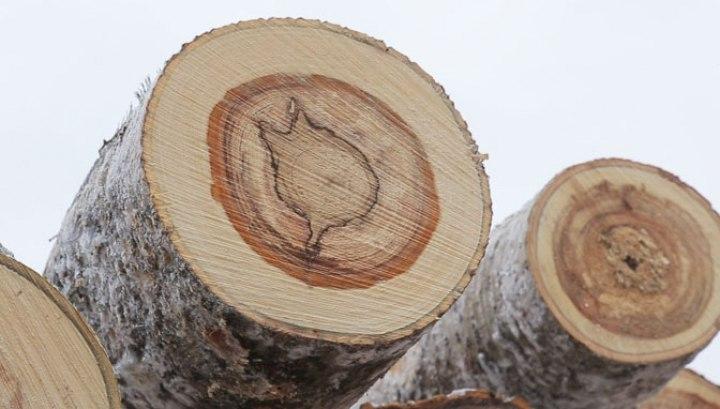 Исправительный труд на лесосеке заставил томича вспомнить о своих детях