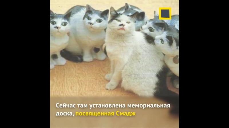Возможно, эти кошки знают об искусстве больше, чем мы.