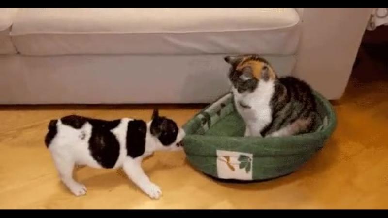 Кот, который постиг дзен:)
