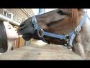 Зоо-порно Наездница и Ее верный конь дикое порево, смотреть до конца