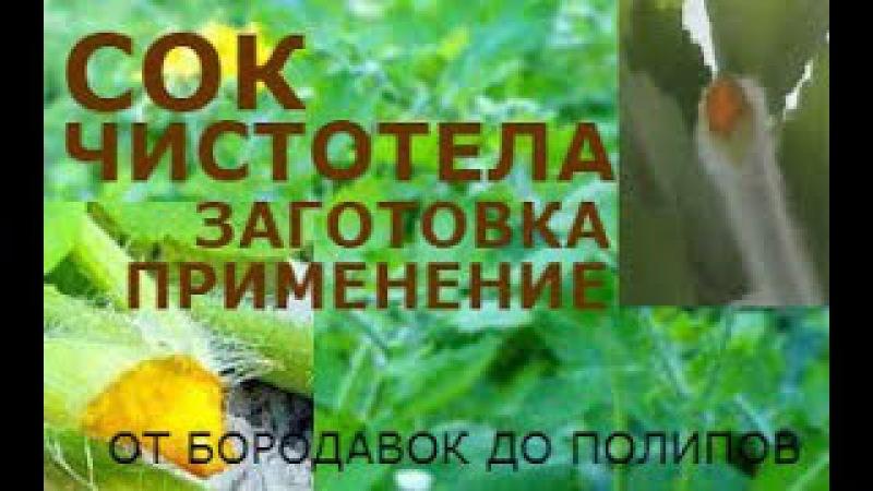 Чистотел сок. Заготовка, лечение. Лечитесь, но будьте осторожны - это ядовитое растение.