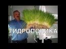 Гидропоника в домашних условиях, своими руками. Что такое гидропоника,  зачем она нужна, инструкции