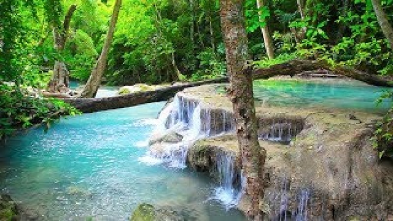 Waterfall Jungle Sounds - Relaxing Tropical Rainforest Nature Sound Singing Birds Ambience (non-stop)