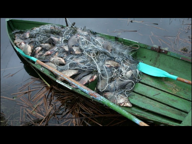 Борьба с браконьерами.Рейды Рыбнадзора.