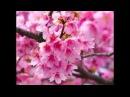 Beautiful Spring Flowers in Bloom Я подарю тебе Весну ^^ HD