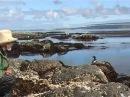 Командорские острова Остров топорков Kamchatka 科曼多尔群岛
