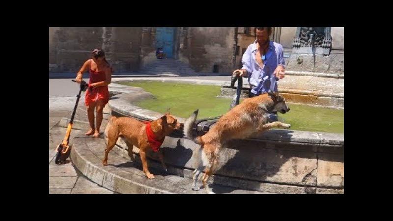 Жаркий Прованс. Собаки и люди в городе Арль. Hot Provence. Dogs and people in the city of Arles.