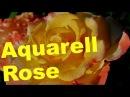 Aquarell Rose Tantau