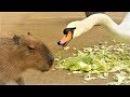 ПРИКОЛЫ ПРО ЖИВОТНЫХ СМЕШНЫЕ ЖИВОТНЫЕ ДОМАШНИЕ ЖИВОТНЫЕ И НЕ ТОЛЬКО Funny Pets Video АВ...