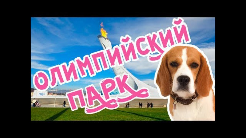 ВЛОГ В ОЛИМПИЙСКОМ ПАРКЕ/БИГЛЬ ДЖИНА В СОЧИ/2017