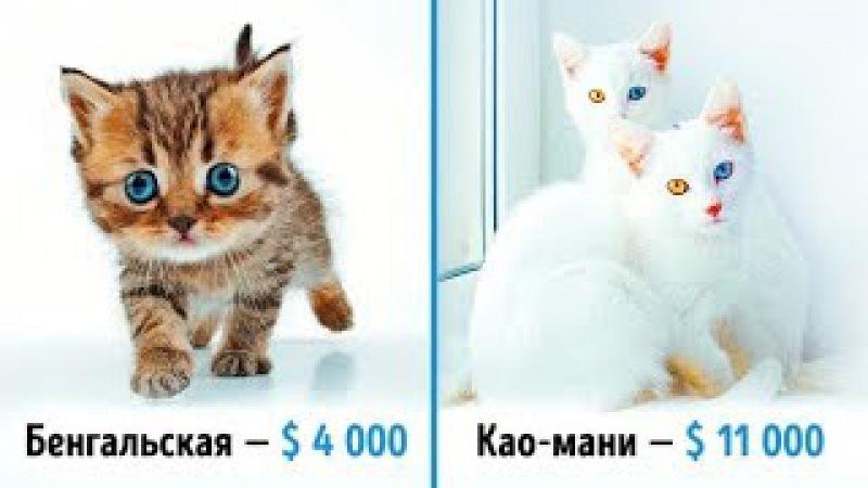 19 шикарных кошек которые стоят целое состояние