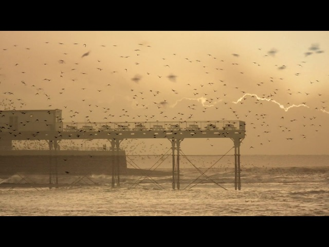 Starlings roosting under the pier in Aberystwyth.