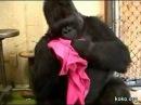 Koko cuddles with her kitten Moe