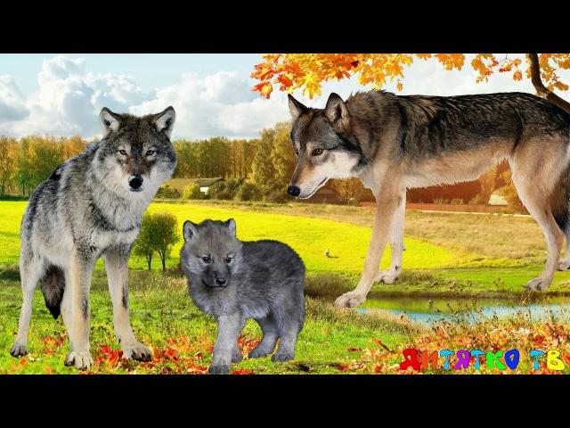 Дикие животные и их дети. Животные и их детеныши. Семья животных. Животные и их детки. Животные для
