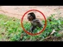 Very Poor Baby Monkey Scares So Much and Crying - Rosa Monkey Mom Take Care Her Baby Monkey