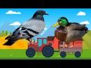 Dạy bé con vật nuôi Phần 2 | Con Thỏ| Chim Bồ Câu| Con Ngan| con gà tây |