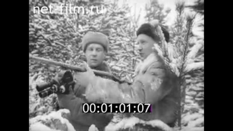 Русская пегая гончая