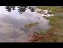Болото Виру в Эстонии Swamp Viru in Estonia yclip scscscrp