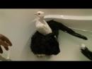 Семейный банный день