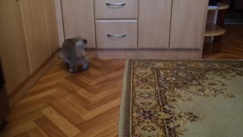 Ирвин живёт у новой мамы в Нижневартовске.