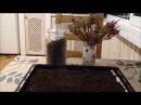Чай из ферментированных листьев Черноплодной РябиныАронии