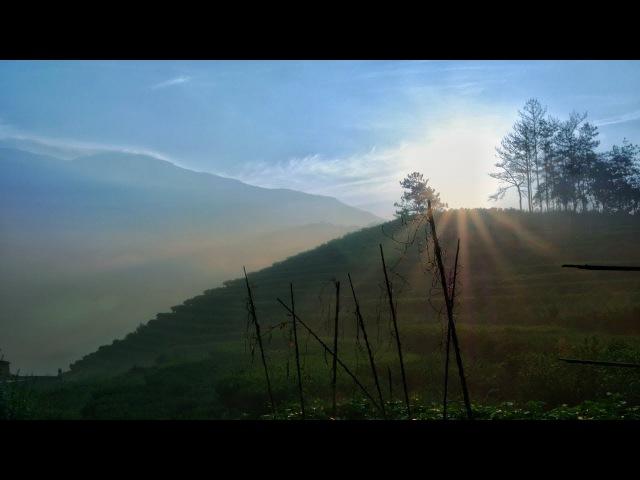Фэн Хуан Дань Цун. Чайная фабрика, особенности производства