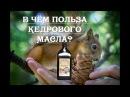 Польза кедрового масла натуральные продукты для здорового питания