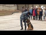 Астраханские школьники в преддверии праздника посетили кинологический центр