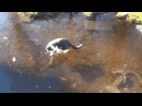 Cat Wants Fish Under Ice - Create, Discover and Share GIFs on Gfycat