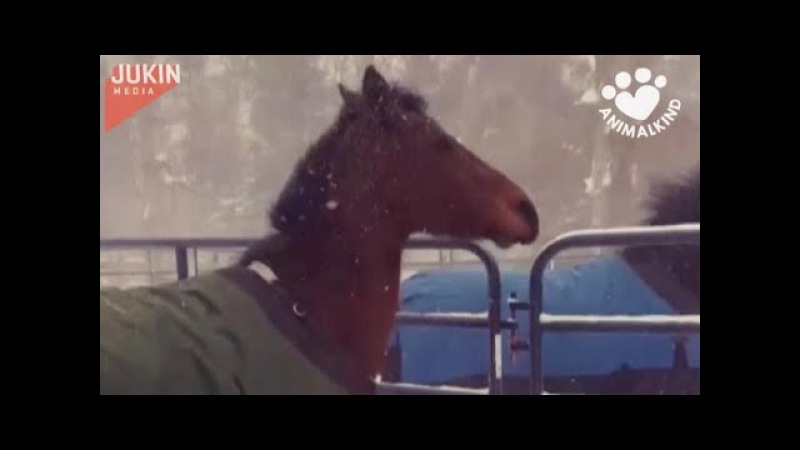 Horses immediately regret stepping out into snow