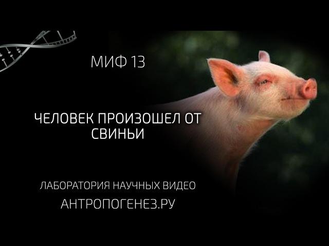 Человек произошел от свиньи. Мифы об эволюции человека xtkjdtr ghjbpjitk jn cdbymb. vbas j, djk.wbb xtkjdtrf