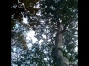 Родина - это Земля. Поля, реки, леса, горы, моря. Мы - всегда Живы и Род наш не угаснет.